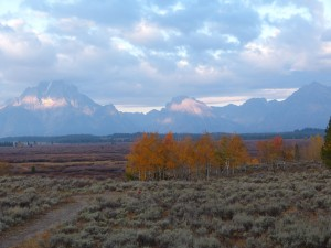 willow flats in Tetons