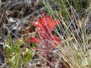 Big Spring Canyon-2