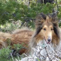 Bella and Beau trail mountain