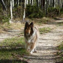 Bella at cabin