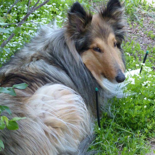Bella in sweet woodruff-5-12